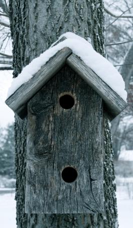birdhouse11.jpg