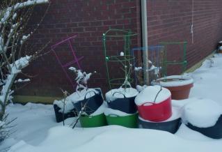 container garden slumbers