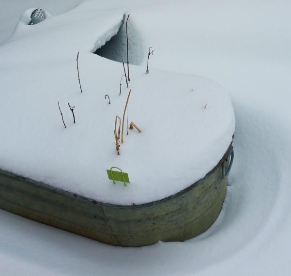 herb tub