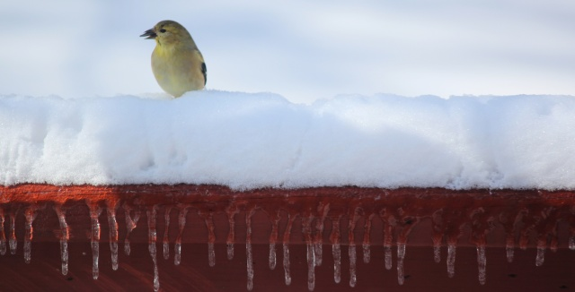 Snowbird horizontal